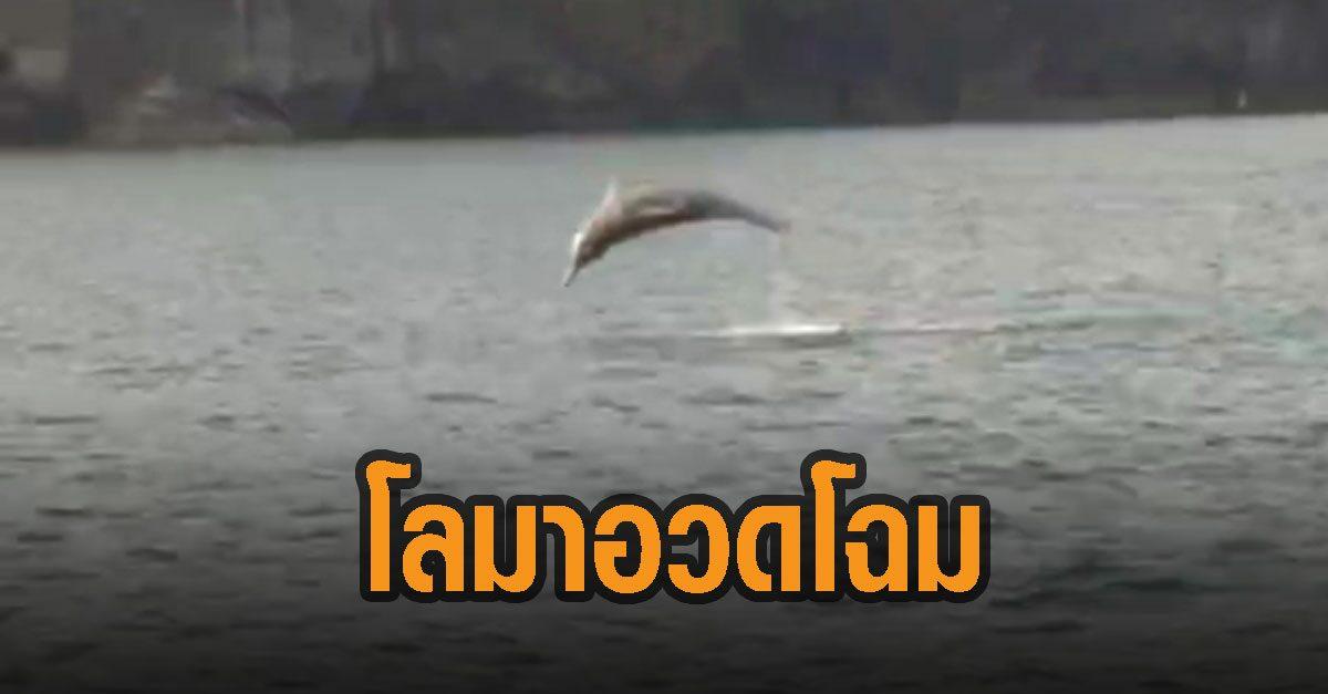 โลมา 5 ตัว กระโดดอวดโฉมชายฝั่งทะเลตรัง อุทยานแห่งชาติอาดเจ้าไหม