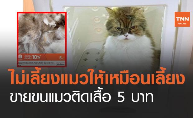 แมวทิพย์! ขายขนแมวติดเสื้อ 5 บ. สำหรับคนไม่เลี้ยงแมว แสร้งเป็นทาสแมว