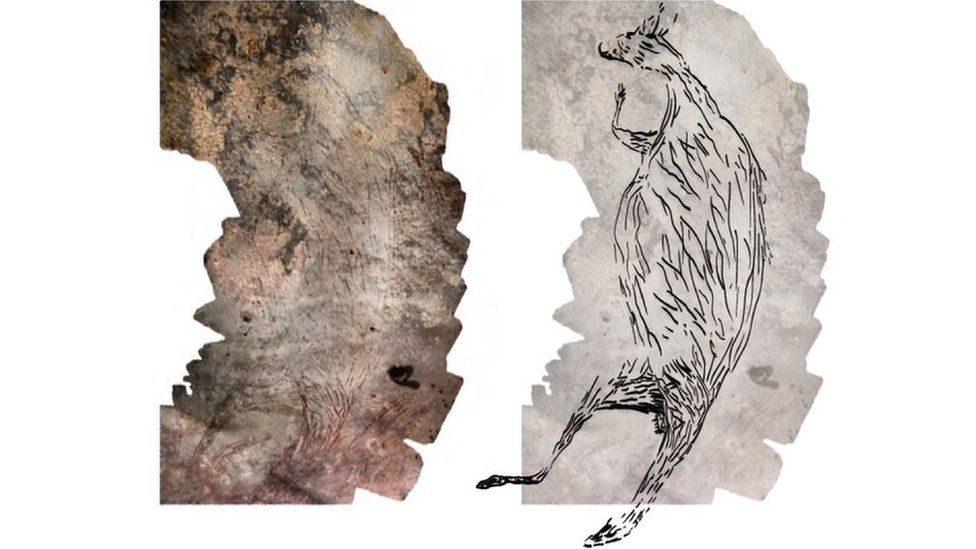 """ออสเตรเลียค้นพบ รูปวาด """"จิงโจ้"""" บนเพดานถ้ำหิน อายุเก่าแก่ 17,300 ปี"""