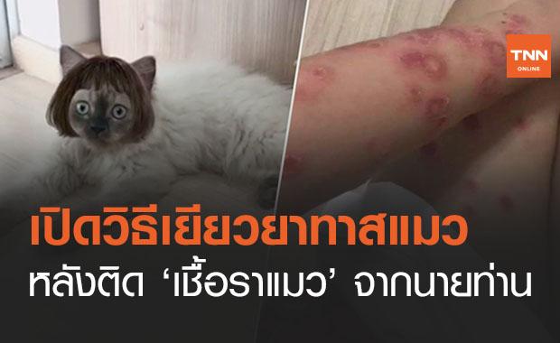 เปิดวิธีเยียวยาทาสแมวหลังติด 'เชื้อราแมว' โรคของคนรักสัตว์