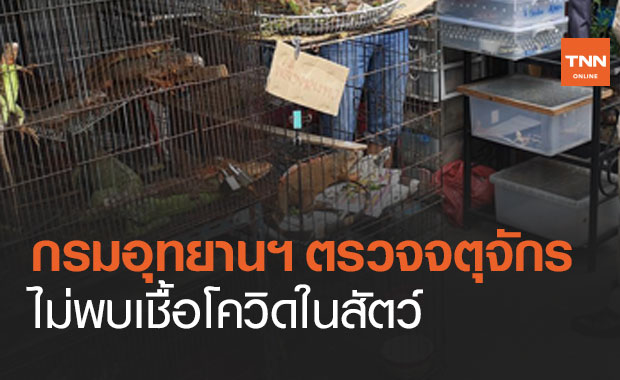 กรมอุทยานฯ โต้ไทยไม่ใช่แหล่งแพร่โควิด เผยผลตรวจสัตว์ในตลาดจตุจักรไม่พบเชื้อ