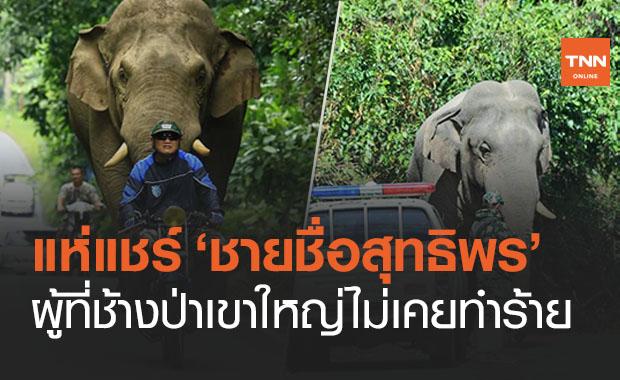 ชาวเน็ตแห่แชร์ 'ชายชื่อสุทธิพร' ผู้ที่ช้างป่าไม่เคยทำร้าย