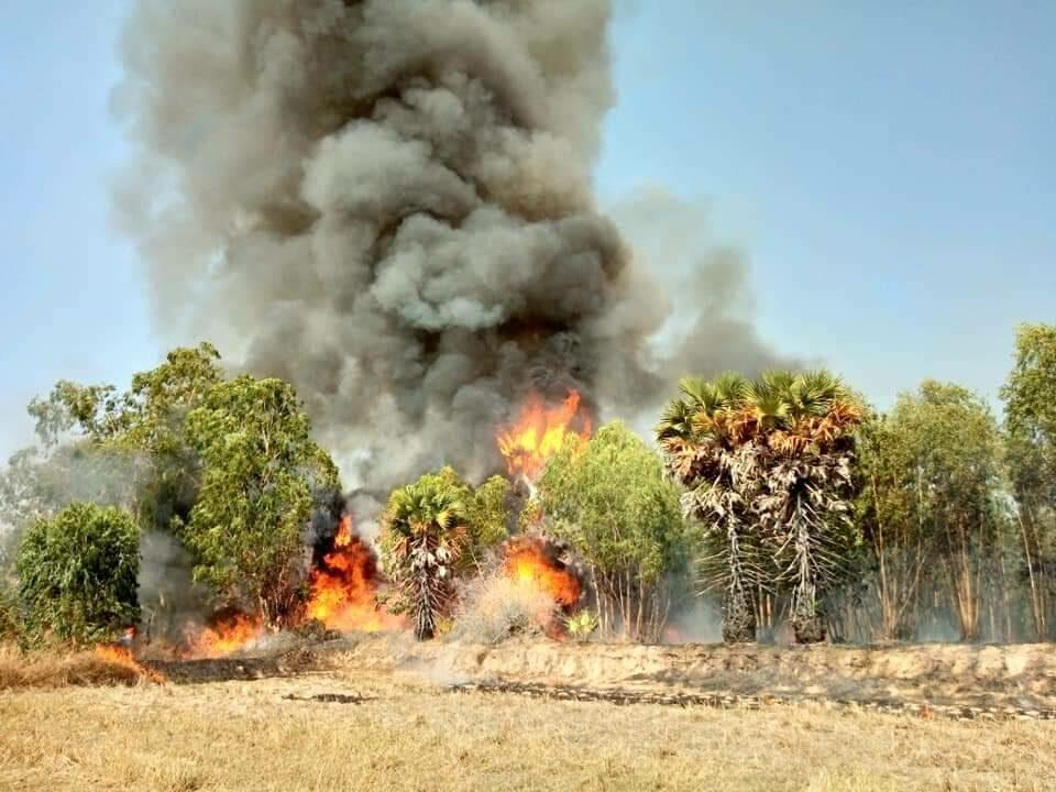 เกษตรกรลอบเผาตอซัง ทำไฟลามสวนยูคา ระดมดับเพลิงจ้าละหวั่น