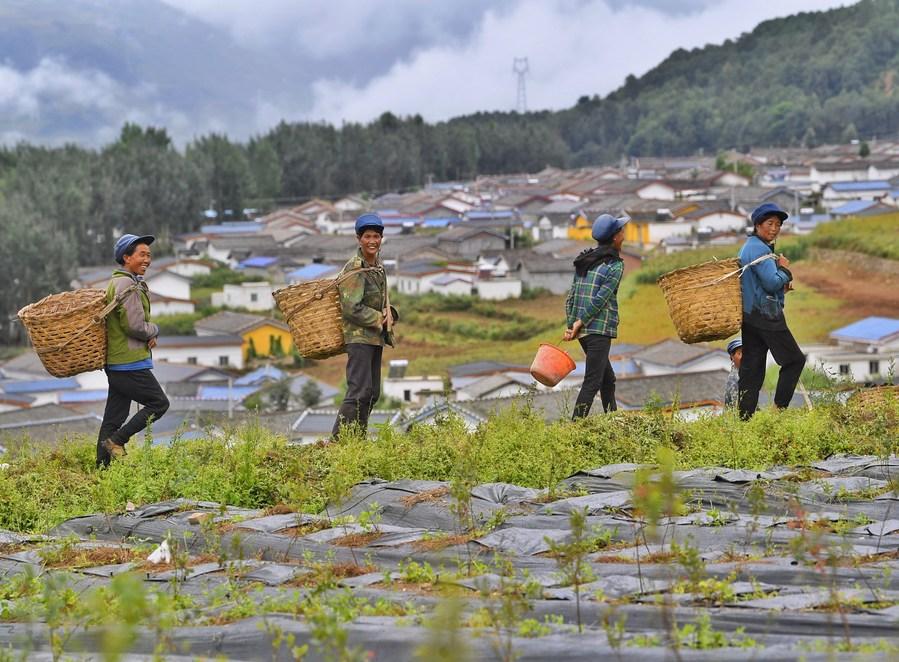 เบี้ยยังชีพเมือง-ชนบทจีน ครอบคลุมปชช. 44.3 ล้านคน