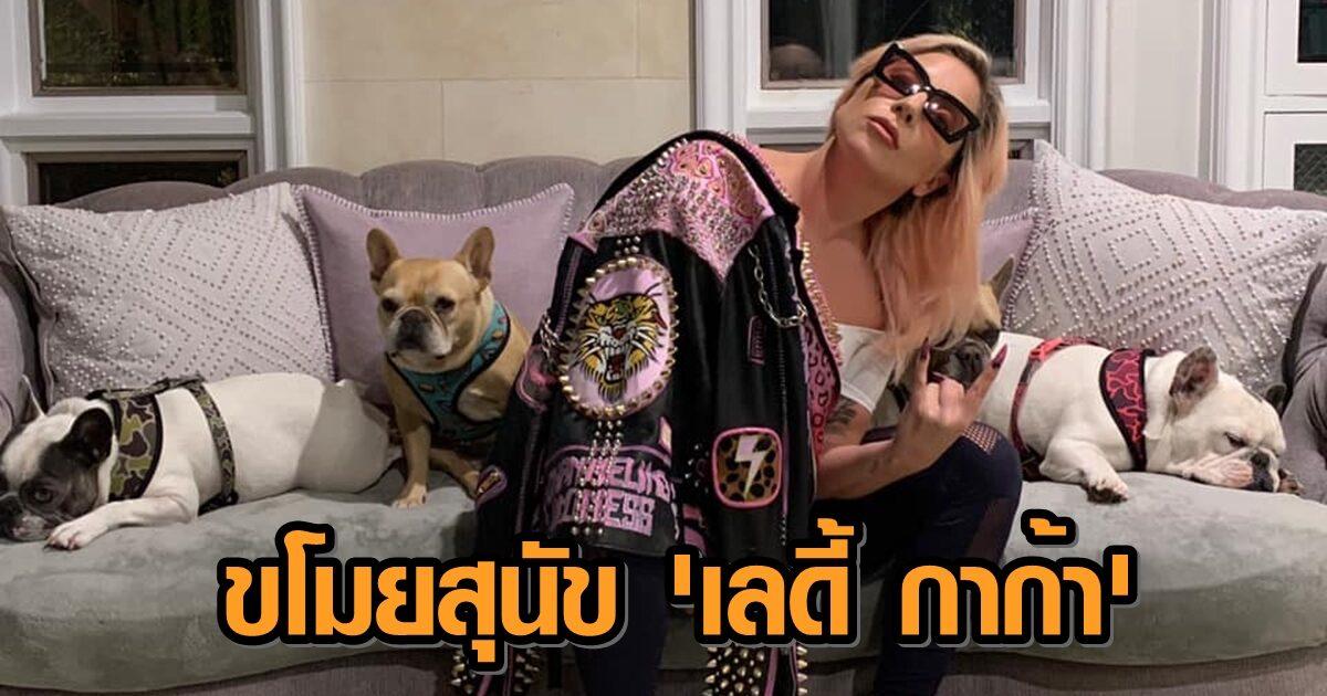 'กาก้า' เสนอเงิน 15 ล้านบาท แลกคืนสุนัขสุดที่รัก หลังโจรแสบยิงคนดูแล-ขโมยหมาไป 2 ตัว