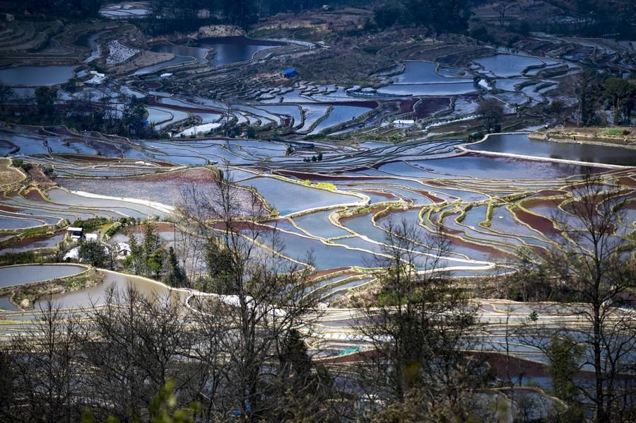 ยลความงาม 'ทุ่งนาขั้นบันไดฮาหนี' ในยูนนาน