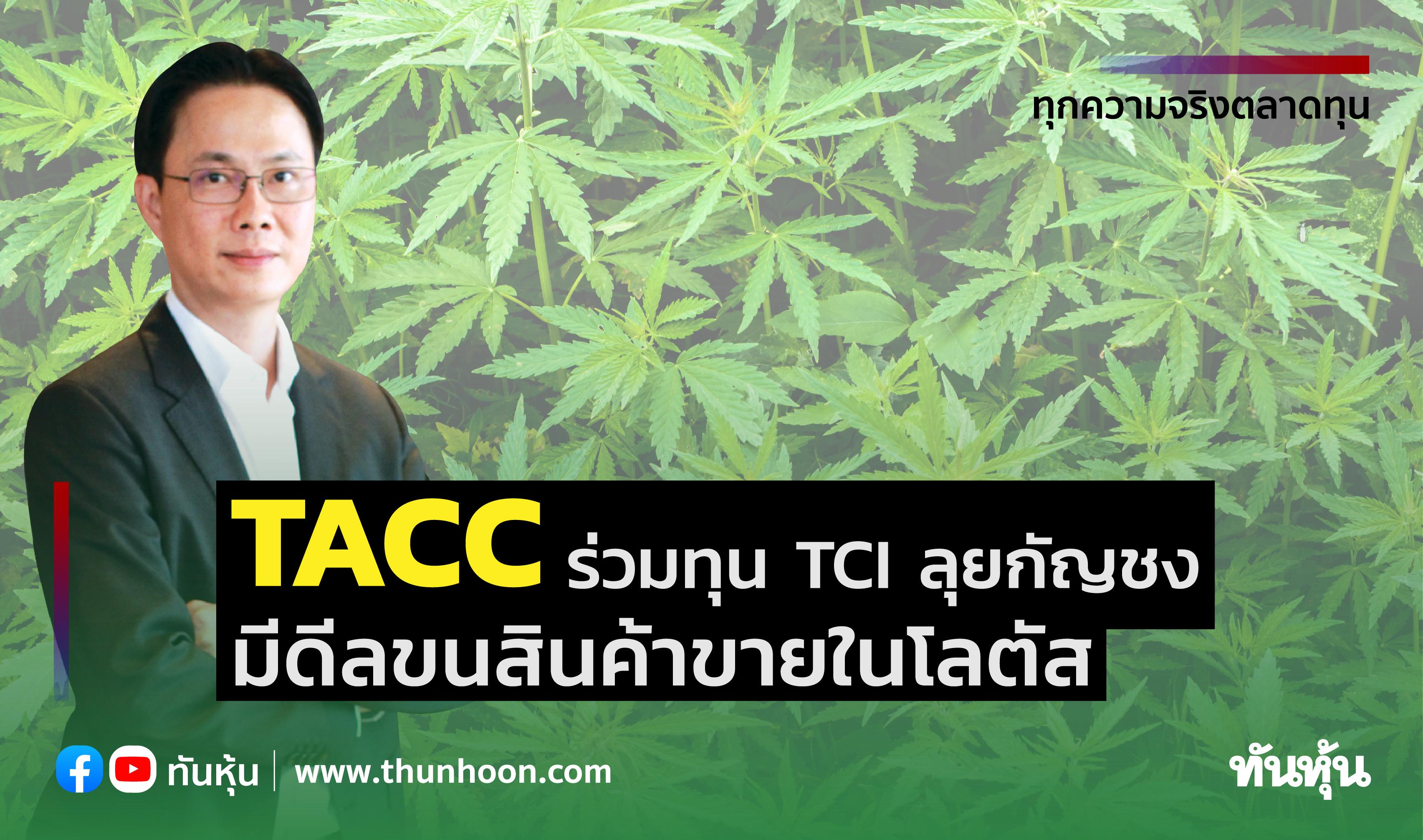TACCร่วมทุนTCIลุยกัญชง มีดีลขนสินค้าขายในโลตัส