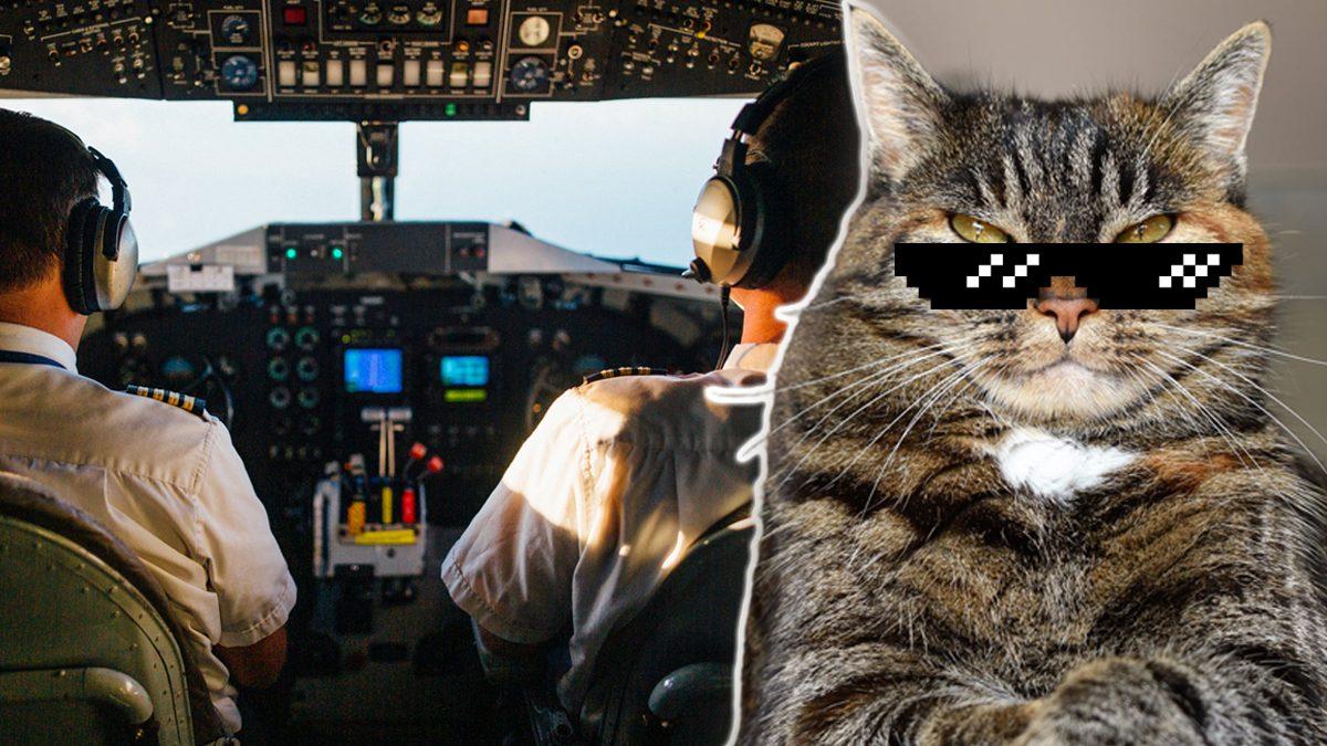 ระทึกน่านฟ้า! แมว โจมตี นักบิน ในห้องควบคุม ก่อนวกเครื่องกลับฉุกเฉิน