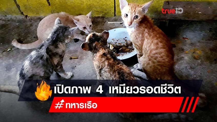 เปิดภาพล่าสุด 4 ลูกแมวตัวน้อย รอดชีวิตจากเรือประมงจมกลางทะเลสตูล