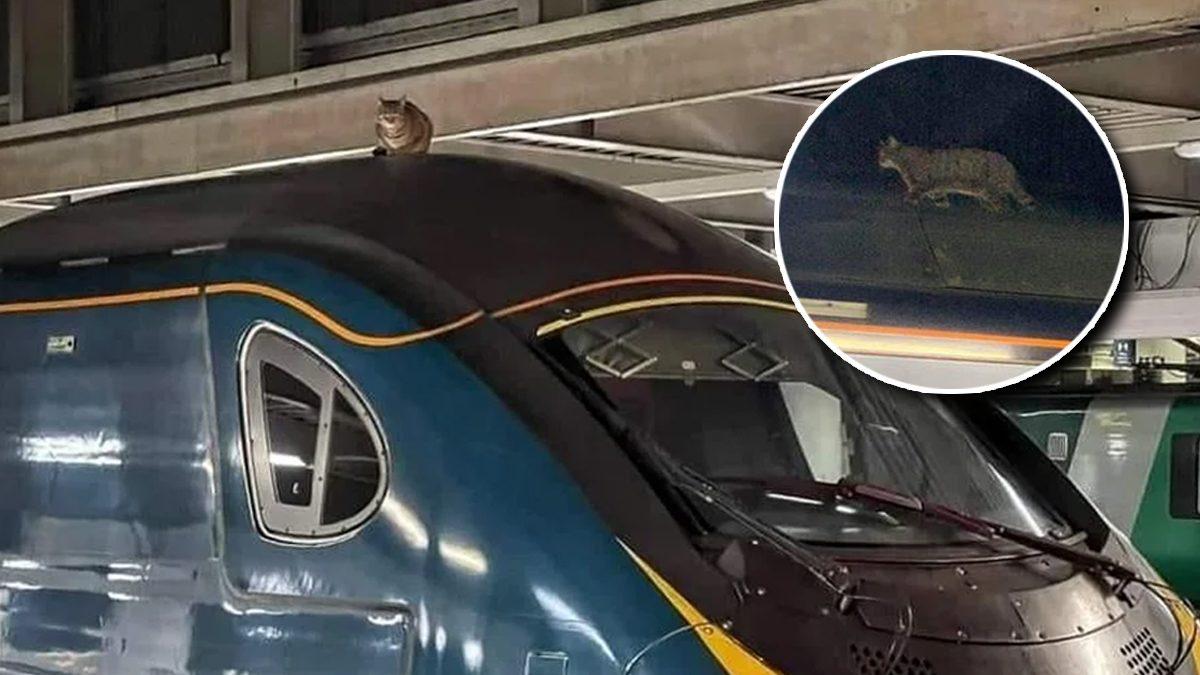 รถไฟลอนดอนป่วน หลังพบ 'แมว' นอนชิลบนหลังคา ทำผู้โดยสารย้ายรถทั้งขบวน