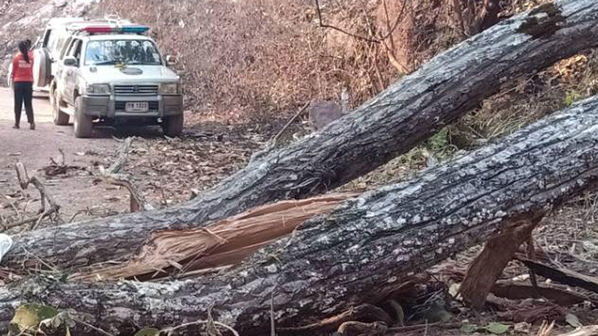 ไฟป่าไหม้ลาม ทำต้นไม้ขนาดใหญ่ โค่นทับเมีย อดีต ผญบ. ดับสลด ต่อหน้าสามี