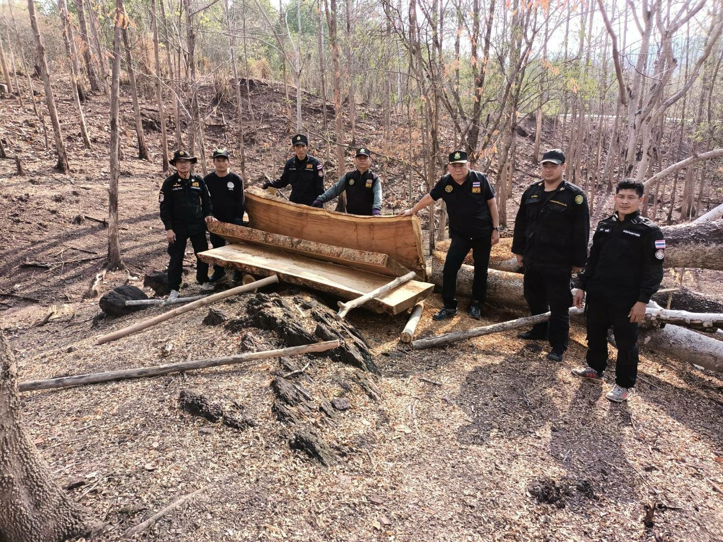 ยึดไม้สัก-ประดู่ ถูกตัดโค่นในเขตป่าสงวนแห่งชาติป่าโป่งแค