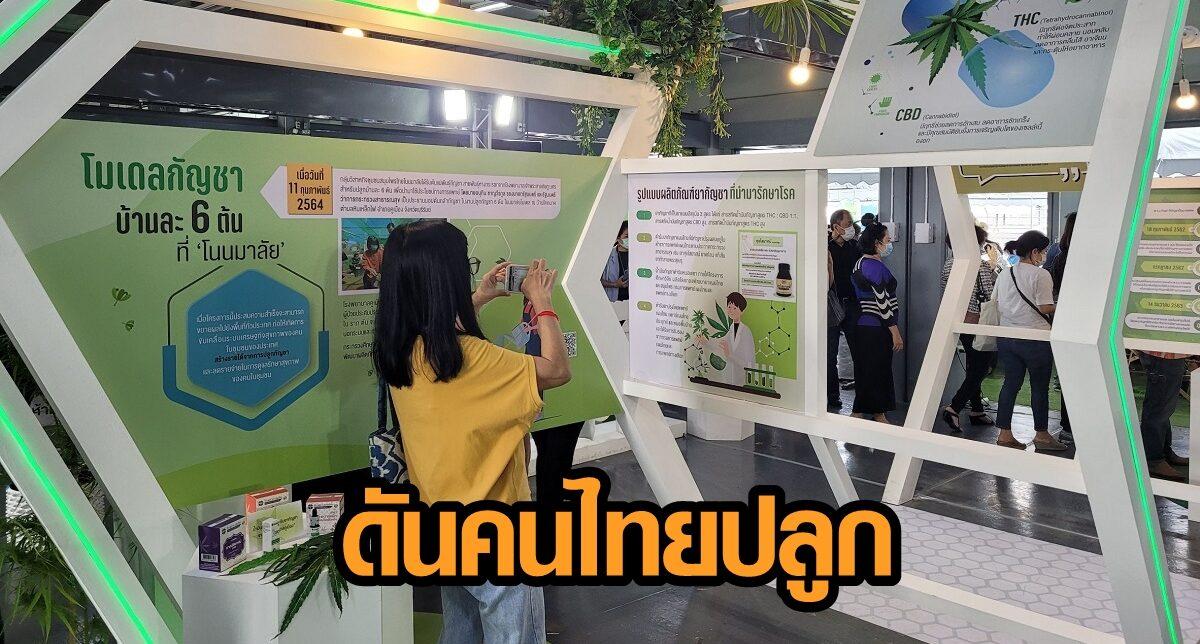 อย. เผยไทยเข้าถึง 'กัญชา-กัญชง' ที่สุดในเอเชีย ดันคนไทยปลูกรองรับตลาดโลก ปรึกษาฟรี