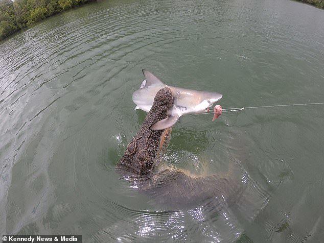 ไอ้เข้พุ่งงาบฉลาม ต่อหน้าต่อตา ยื้อแย่งนักเย่อปลากลางทะเล