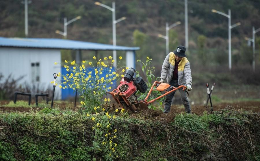 เกษตรกรกุ้ยโจวต้อนรับ 'ฤดูแมลงตื่น'