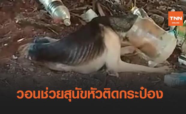 วอนช่วยด่วน!สุนัขแม่ลูกอ่อนหัวติดกระป๋อง ผอมจนเห็นกระดูก