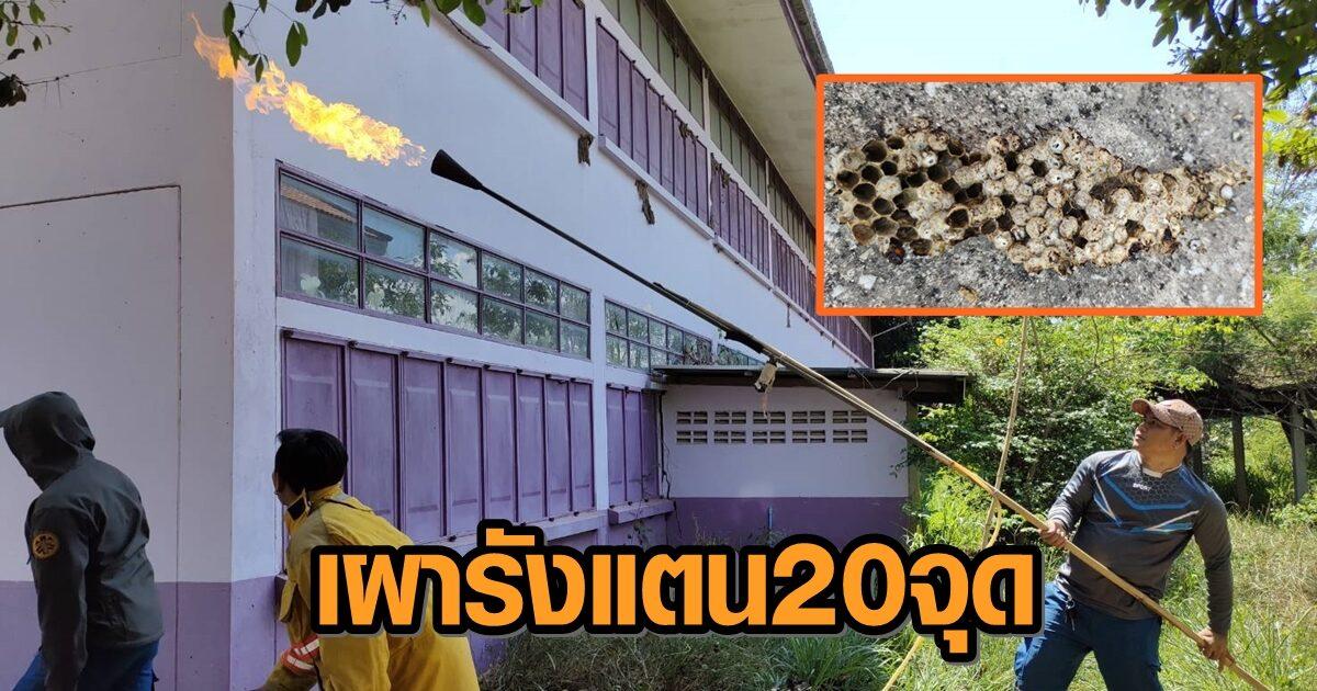 ครูสุดทน โร่แจ้งกู้ภัยช่วยเผา หลังฝูงแตนทำรังล้อมอาคารเรียนกว่า 20 จุด ไล่ต่อย นร. เจ็บบ่อยครั้ง