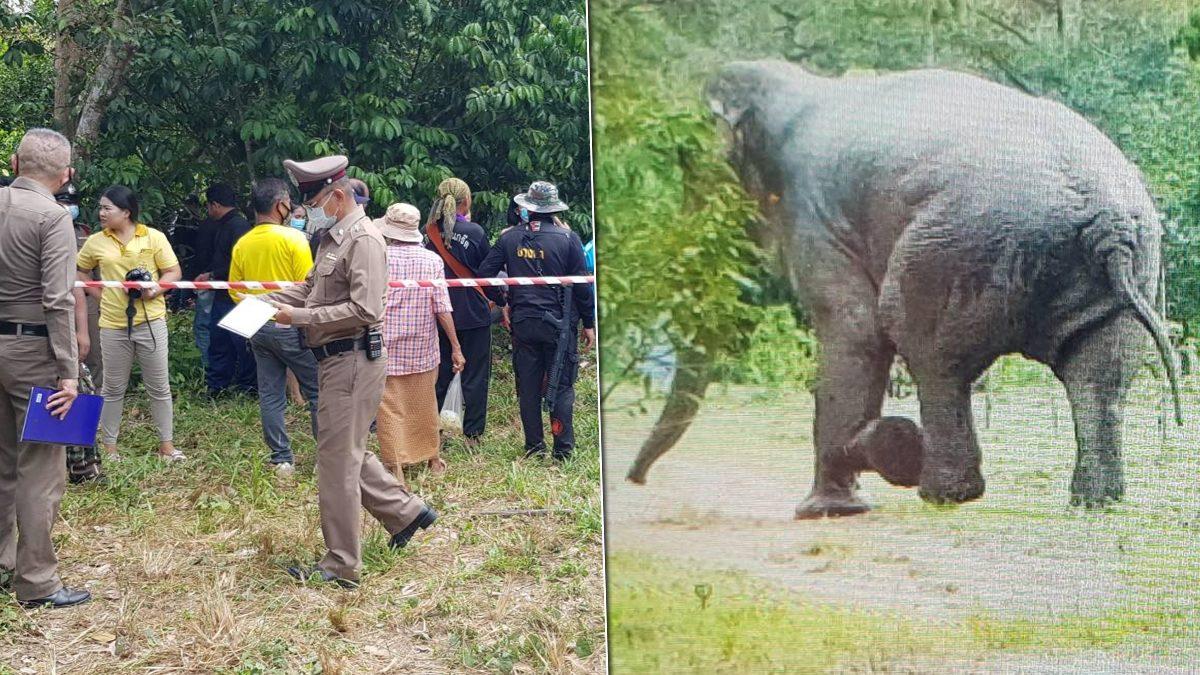 ช้างป่าทำร้ายหญิงวัย60 ดับสลด รปภ.สาหัส ชาวบ้านเผยปกติช้างตัวนี้ไม่เกเร