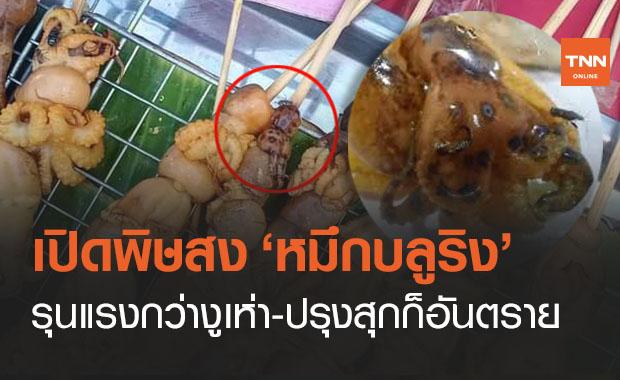 เตือนอีกครั้ง! 'หมึกบลูริง' พิษรุนแรงกว่างูเห่า 20 เท่า โดนแล้วเป็นตายเท่ากัน