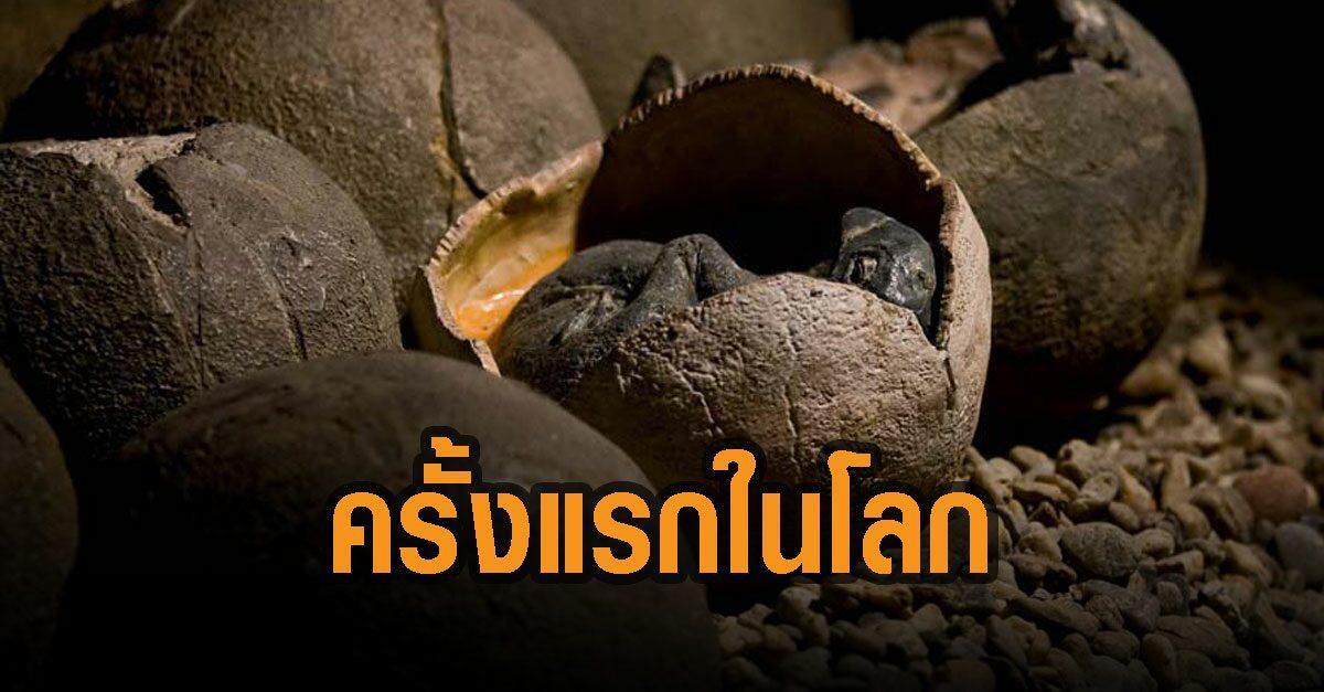 ฮือฮา! พบฟอสซิล ไดโนเสาร์กกไข่ แถมพบตัวอ่อนในไข่ ครั้งแรกของโลก