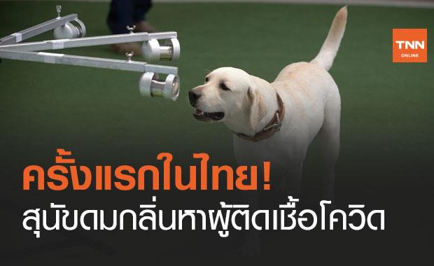 """จุฬาฯ วิจัย """"สุนัขดมกลิ่น"""" หาผู้ติดเชื้อโควิด ครั้งแรกในไทย แม่นยำถึง 95%"""