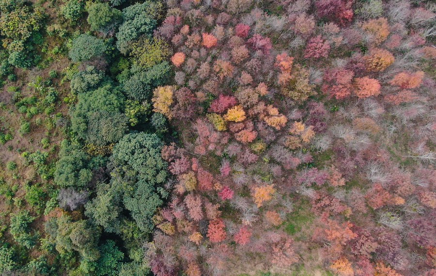 แผ่นดินใหญ่ออกมาตรการหนุน 'บริษัททุนไต้หวัน' พัฒนาธุรกิจเกษตร-ป่าไม้