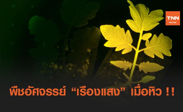 """พืชพันธุ์ใหม่จาก InnetPlant """"เรืองแสง"""" บอกความต้องการของตัวเองได้"""