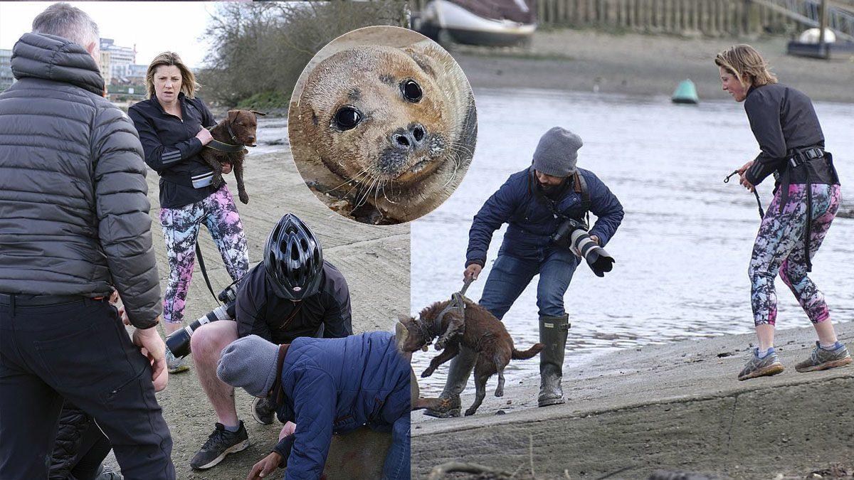 แมวน้ำดาวดังตายฟรี ตร.ลอนดอนเผยเอาผิดเจ้าของหมาไม่ได้