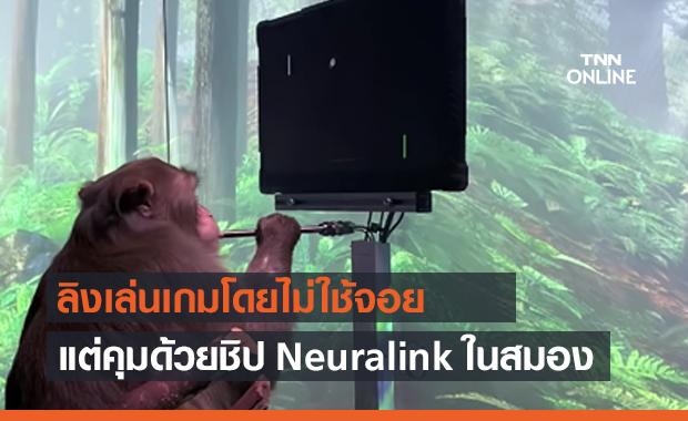 ลิงเล่นเกม Pong โดยไม่ใช้จอย แต่ควบคุมด้วยชิป Neuralink ในสมอง
