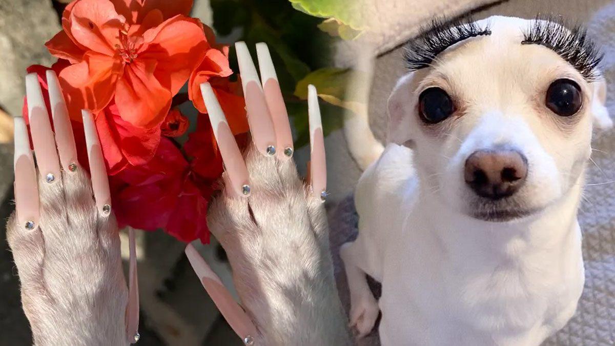 ช่างทำเล็บสาว ทำ 'เล็บปลอม' ให้ชิวาวาแสนรัก แจงทำเพราะรักไม่ได้ทำร้ายสัตว์