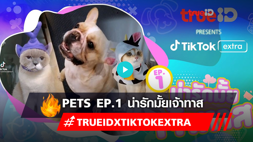 TrueID Presents TikTok Extra : Pets EP.1 น่ารักมั้ยเจ้าทาส