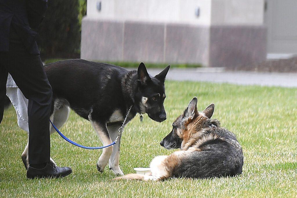 ปรับพฤติกรรม สุนัขหมายเลขหนึ่ง ไบเดนให้ฝึกใหม่ ห้ามฟัดมั่ว