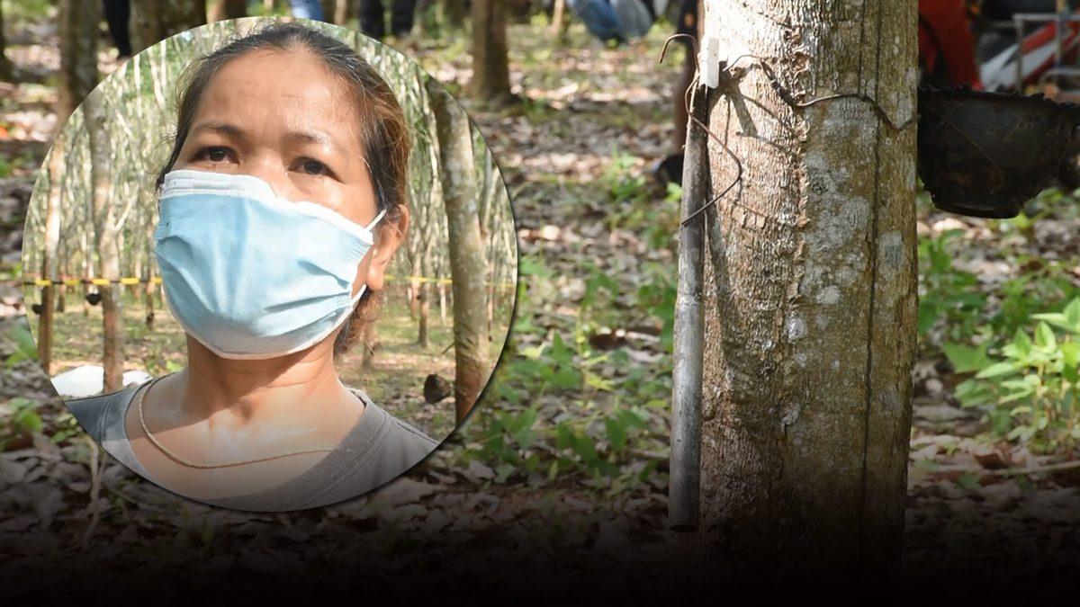 สามีแห่งชาติ! ตะโกนไล่เมียวิ่งหนีช้างป่า ตัวเองยอมถูกทำร้ายตายแทน เมียเปิดใจทั้งน้ำตา