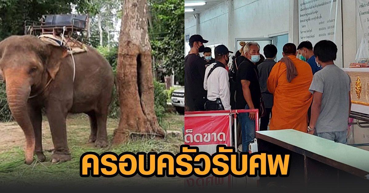 ครอบครัวเศร้ารับศพ ขรก.ถูกช้างเหยียบเสียชีวิต พี่ชายผู้ตายเผยน้องรักช้าง ไม่คาดฝันเรื่องจะจบเช่นนี้