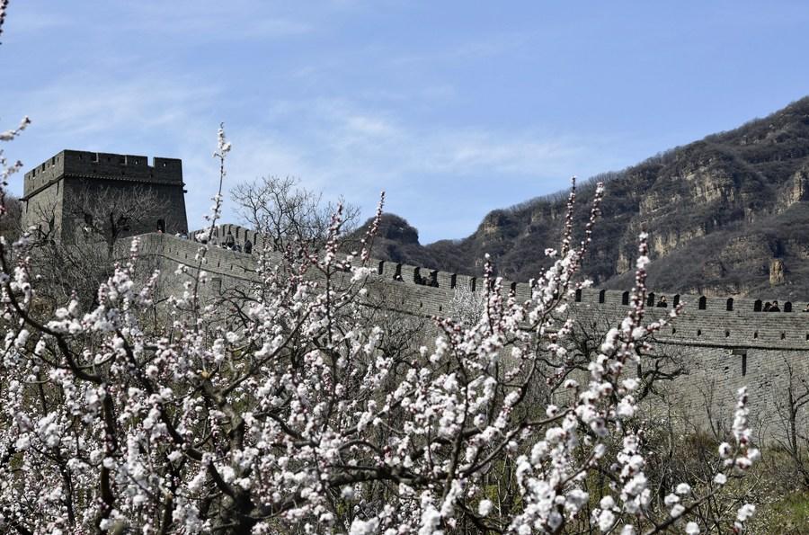 ชาวเมืองแห่ชมกำแพงเมืองจีน ผลพวงกระแสนิยม 'เที่ยวชนบท'