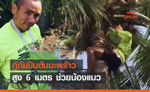 น่าชื่นชม! กู้ภัยปีนต้นมะพร้าวสูง 6 เมตร ช่วยน้องแมว