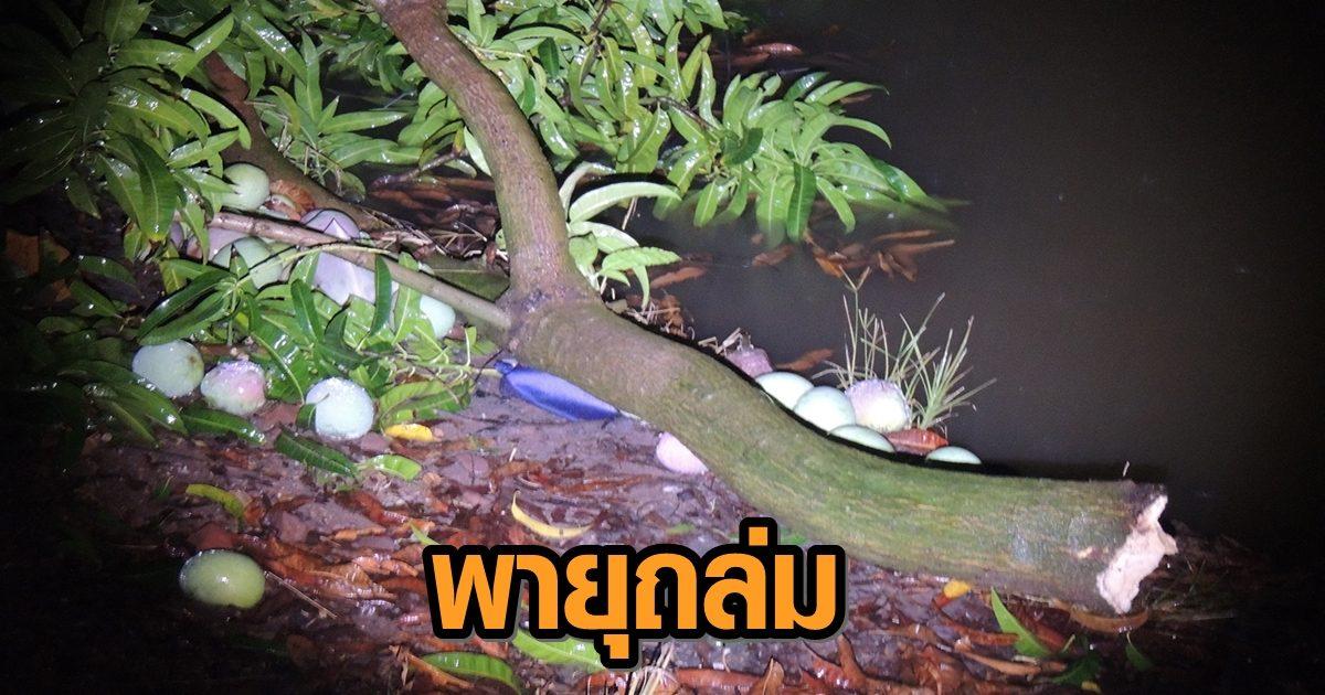 พายุฝนถล่มสวนมะม่วงราชบุรี สร้างความเสียหายแล้วกว่า 3 แสนบาท