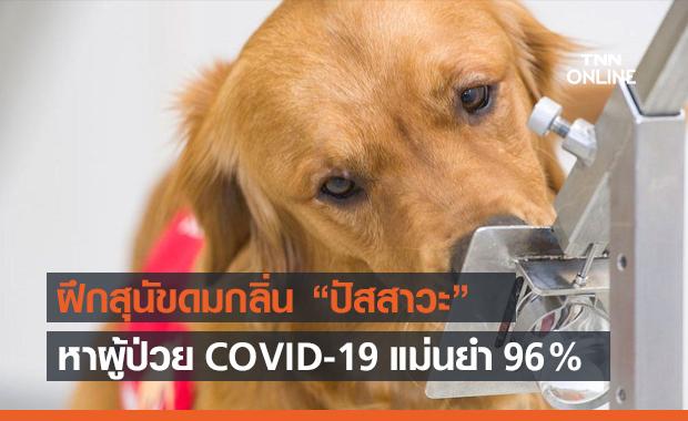 ฝึกสุนัขดมกลิ่นปัสสาวะ ค้นหาผู้ป่วย COVID-19 ได้แม่นยำถึง 96%