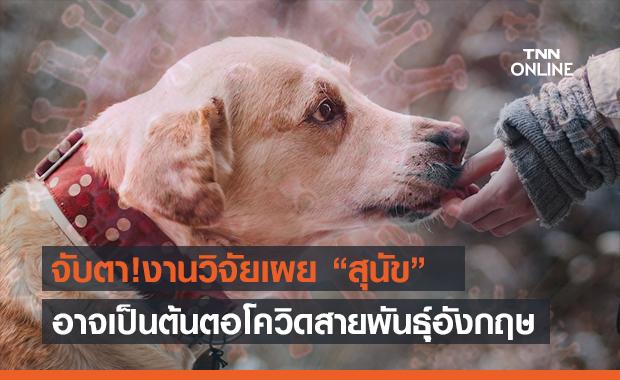 """นักวิจัยจีนชี้ """"สุนัข"""" อาจเป็นต้นตอไวรัสกลายพันธุ์สายพันธุ์อังกฤษ"""