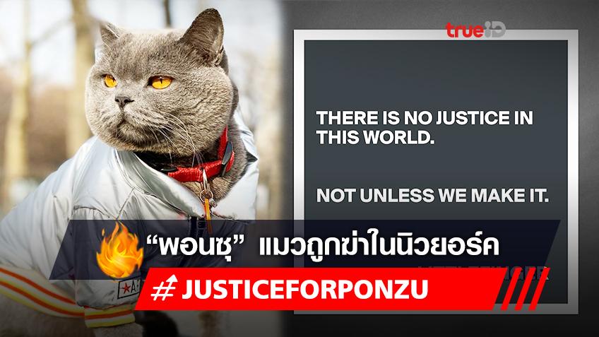 "#justiceforponzu ""พอนซุ"" แมวของชาวเอเชียถูกฆ่า สะท้อนปัญหา #StopAsianHate"