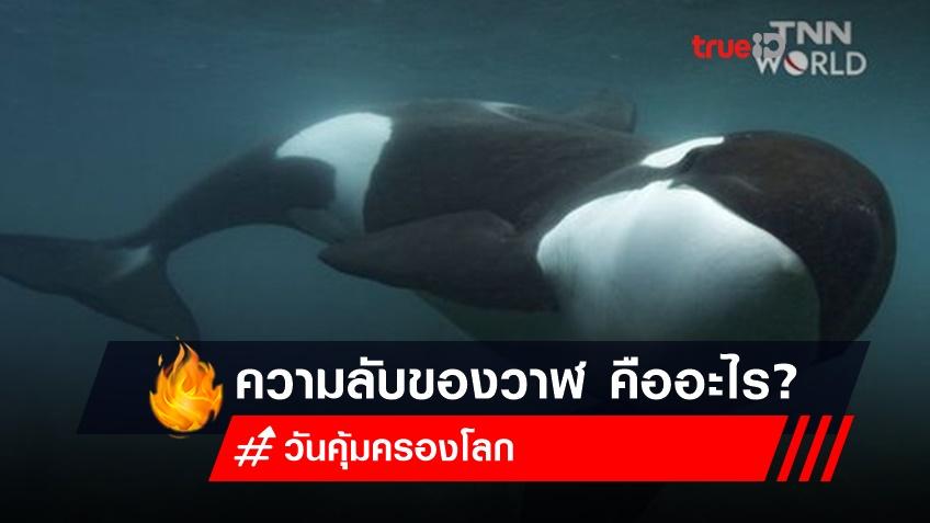 ความลับของวาฬ ในวันคุ้มครองโลก