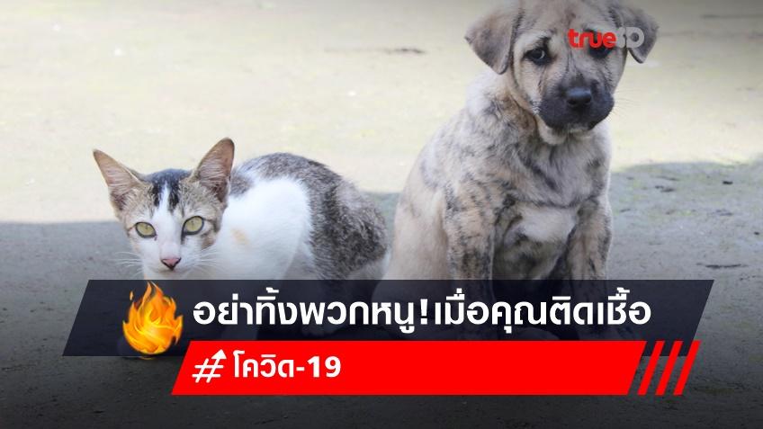 อย่าทิ้งพวกหนู! เปิดวิธีดูแล 'น้องหมา-น้องแมว' เมื่อคุณติดเชื้อโควิด