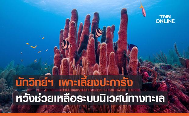 นักวิทย์ฯ ญี่ปุ่น เพาะเลี้ยงปะการังได้สำเร็จ หวังช่วยเหลือระบบนิเวศน์ทางทะเล