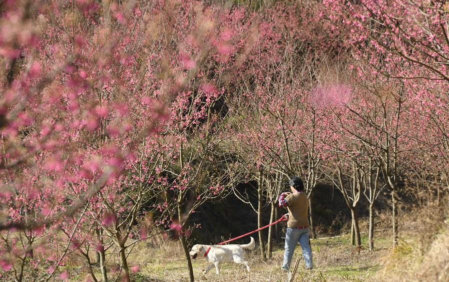 เริ่มแล้ว! จีนบังคับเจ้าของสุนัข ใช้ 'สายจูง' ในพื้นที่กลางแจ้ง