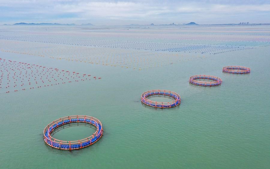 นักวิจัยจีนพบกลุ่มแบคทีเรียฉายแววช่วย 'ลดขยะพลาสติกในทะเล'