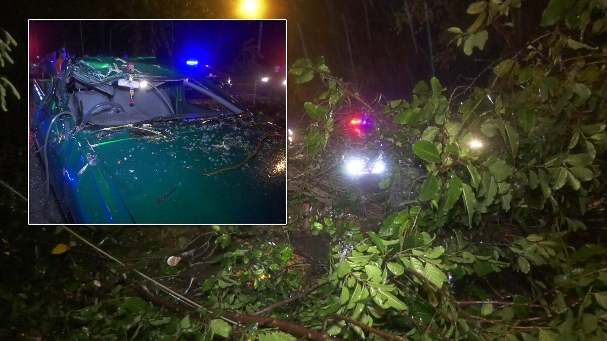 เพิ่งซื้อรถมาขับได้ไม่ถึงวัน! พายุพัดต้นไม้ล้มกลางถนน กระบะหลบไม่ทัน พุ่งชน เจ็บ 2