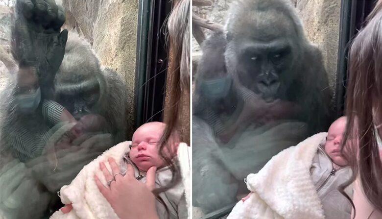 คลิปไวรัล แม่ลิง-แม่คนอุ้มลูกทักทายกัน แววตาเปี่ยมด้วยความรัก