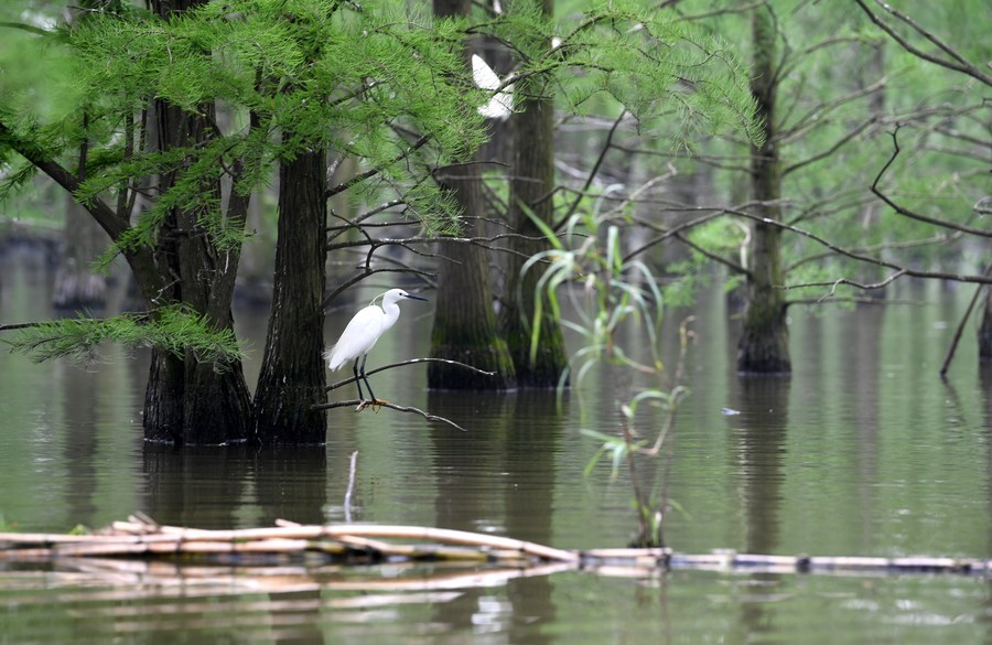 ส่อง 'พื้นที่ชุ่มน้ำทะเลสาบฉือซาน' สรวงสวรรค์ของเหล่านก