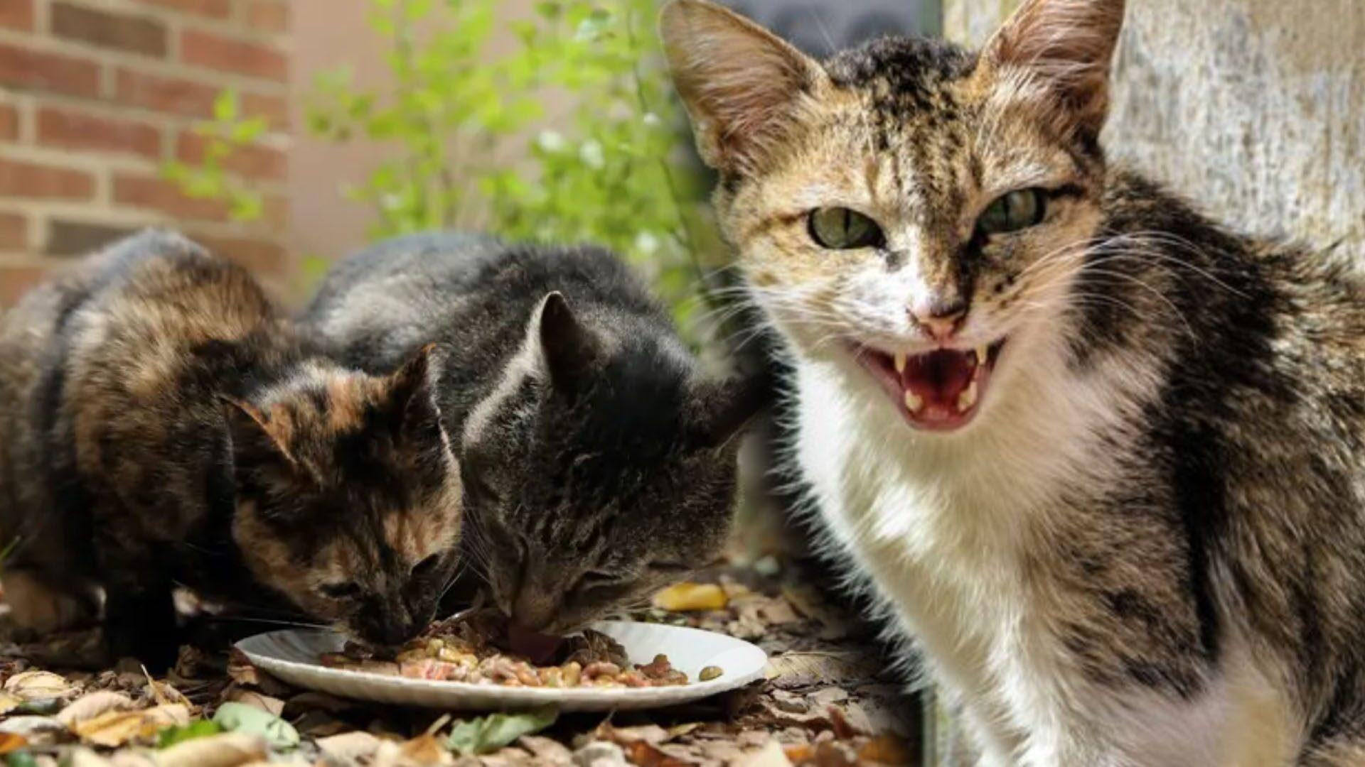 ชิคาโก ผุดไอเดียเด็ด ปล่อยแมว 1,000 ตัว จัดการปัญหาหนูล้นเมือง