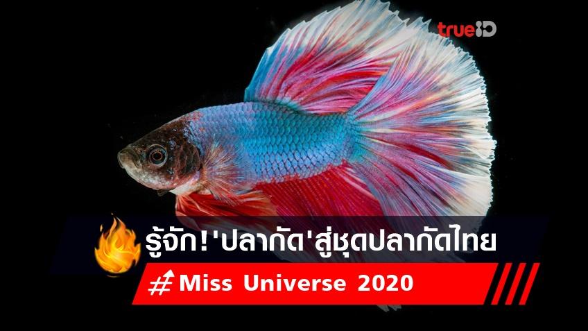 รู้จัก! ปลากัด สัตว์น้ำสวยงาม สู่ ชุดปลากัดไทย อวดความเป็นไทยบนเวที Miss Universe 2020